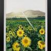 Field of Sunflowers in France
